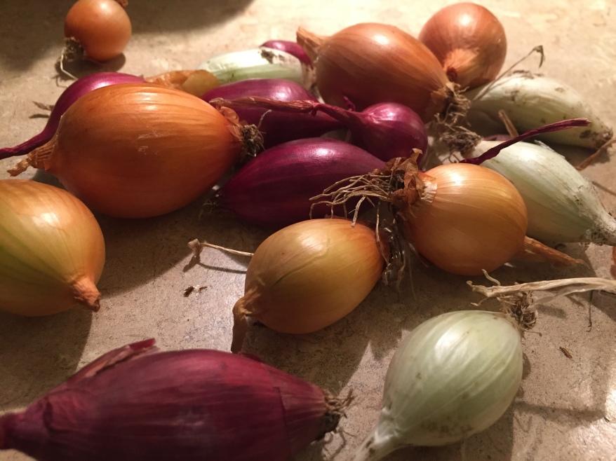 peel pearl onions